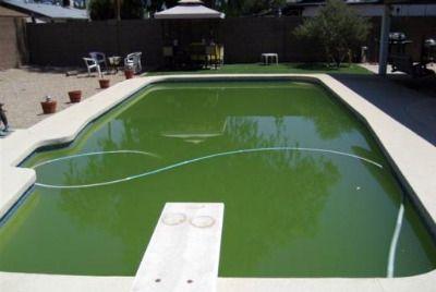 Swimming Pool Algae Algae Swimming Pool Algae In Pool