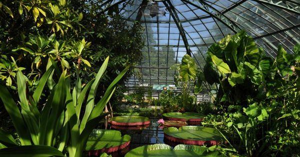 Botanischer Garten Die Schonsten Grunanlagen Der Schweiz Botanischer Garten Indoor Garten Garten