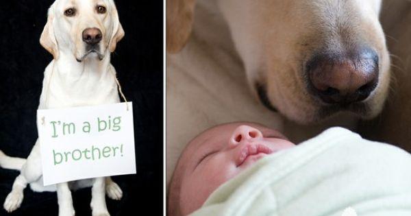Cute family dog photo