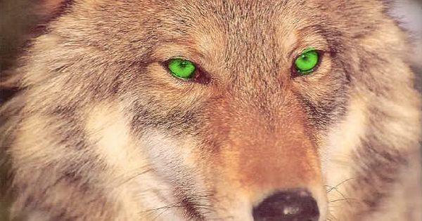black wolf green eyes-#32