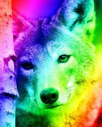 Rainbow Wolf With Images Fantasy Wolf Wolf Fan Art