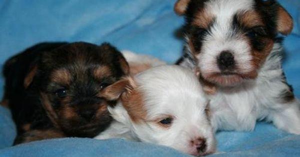 Petition Ebay Ka Verbieten Sie Anzeigen Mit Lebenden Tieren Change Org Mit Bildern Ausgestopftes Tier Tiere Hunde