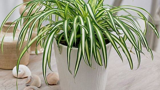 Air Purifying House Plants Pet Safe Air Cleaning Plants Plants Indoor Plants