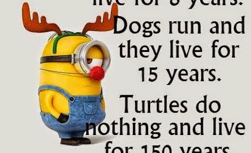 Minions, rabbits, dogs, turtles. See my Despicable Me Minions pins www.pinterest.com...