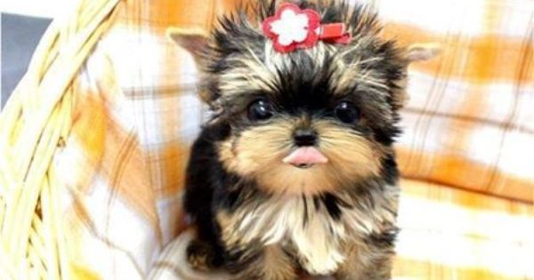 Pin By Delailah On Cute Baby Animals With Images Fluffy