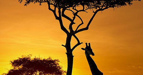 Safari Kenya spent a few days here and saw som beautiful animals