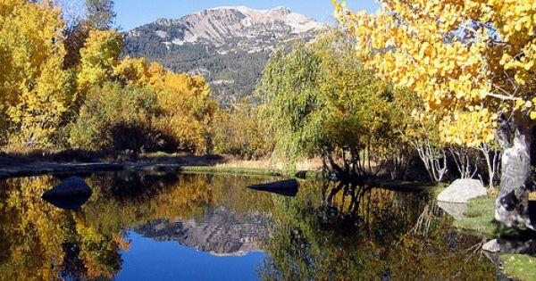 Fall at Mammoth Lakes Eastern Sierra region golden aspen and pines