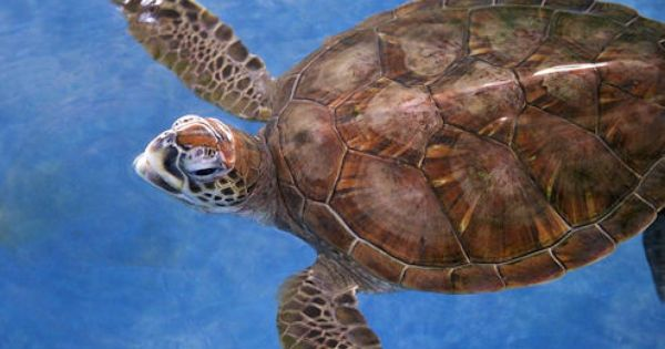 Tortoise and Water on Pinterest