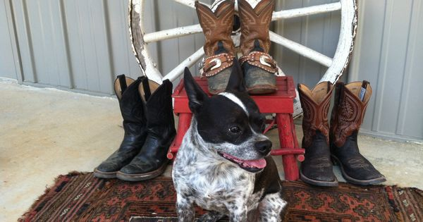 Cowgirl barns and dogs on pinterest