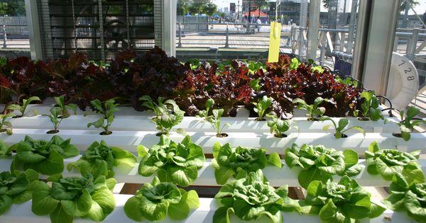 Indoor Hydroponic Vegetable Herb Gardening Hydroponics Hydroponic Vegetables And