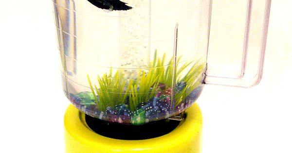 Betta blender fish tank betta pinterest blenders for Fish in a blender