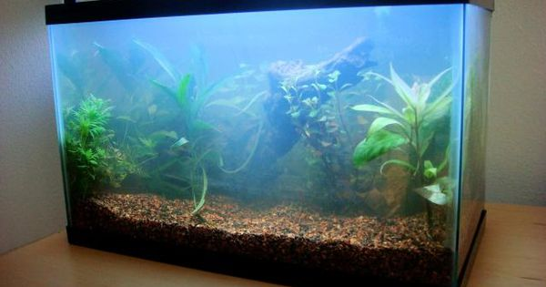 Why your fish tank has cloudy water what you can do for My fish tank water is cloudy