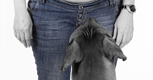 Pregnancy photography with dog - zwangerschapsfotografie met hond in2pictures fotografie