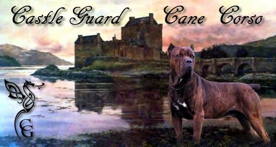 Castleguard Cane Corso Cane Corso Grazing Animals Puppies