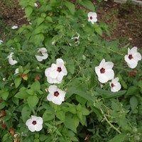 f7dfbdb84d5f261417192f0415a9408d - Collin County Master Gardeners Garden Show