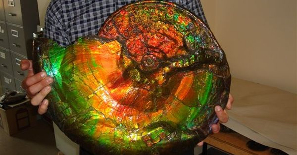 I present to to you: a gigantic opalized ammonite fossil - Imgur