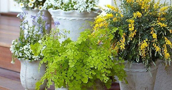 MOSQUITO REPELLING PLANTS: Citronella, Lemon Eucalyptus, Cinnamon, Castor, Rosemary, Lemongrass, Cedar, Peppermint,