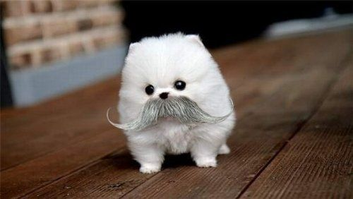 Fluffy Puppy with Mustache