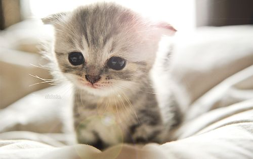 Too cute Kitty Cat! My heart just melted! Soooooo sweet! :)yu
