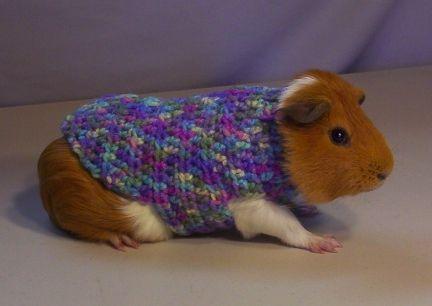 Pin Op I Love Guinea Pigs