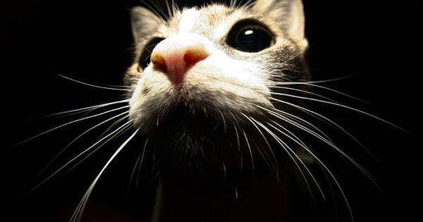 I love kitty cats!