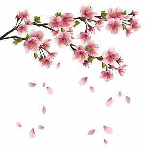 Pink Petal Falling Cherry Blossom Flower Blossom Petals Sakura Transparent Background Png Cl Cherry Blossom Art Cherry Blossom Drawing Cherry Blossom Petals
