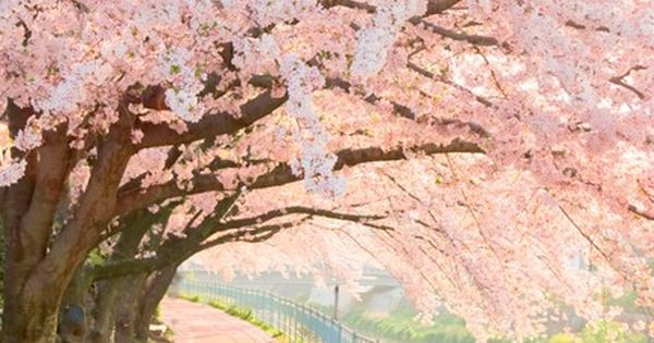 such a beautiful print! cherry blossom trees pastel magical pretty