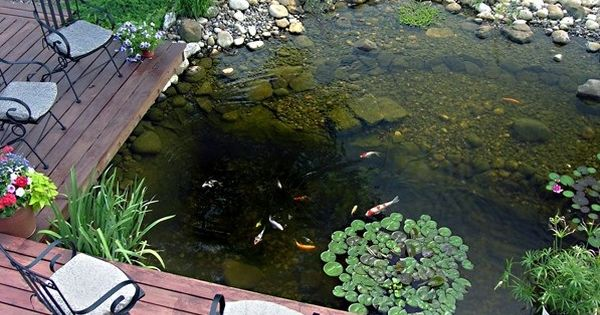 Water Pond Ideas 53 Cool Backyard Pond Design Ideas Digsdigs Pond Ideas Pinterest
