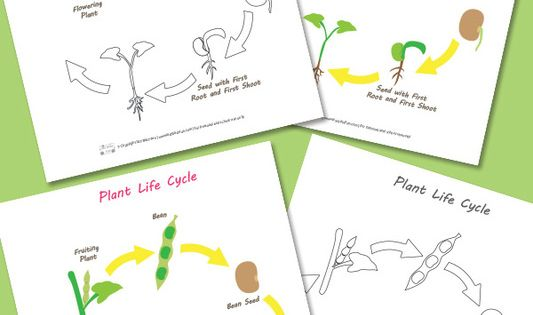 Plant Life Cycle Worksheet Worksheets Free Printable