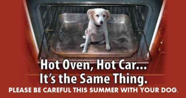 Something To Keep In Mind As Warmer Weather Approaches Pet