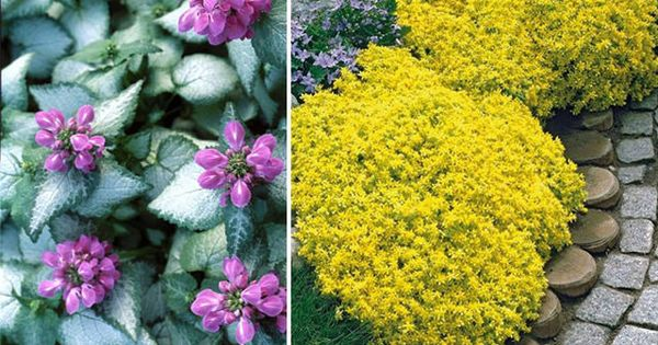 18 Best Flowering Ground Cover Plants That Are Easy To 400 x 300