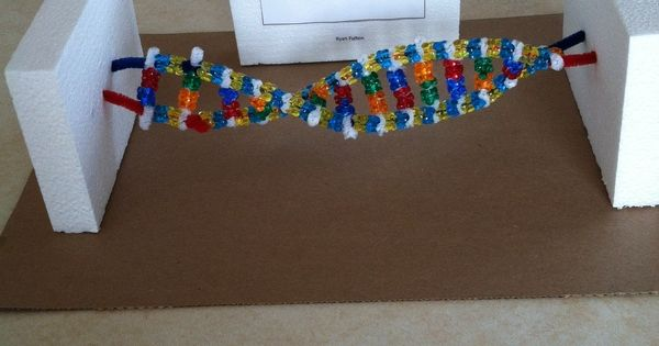 DNA model | 6th grade Science | Pinterest | Models, Dna ...