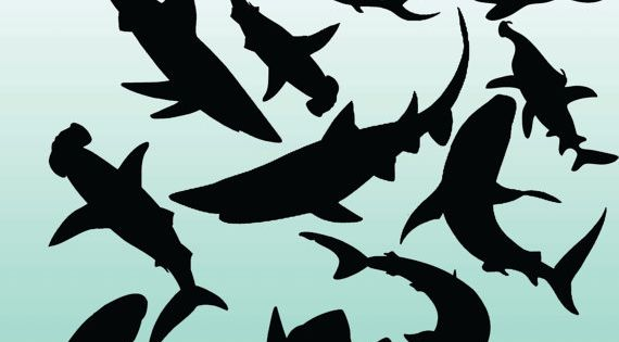 12 Shark Silhouette Digital Clipart Images Clipart Design