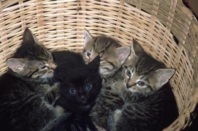 How To Use Lemon To Kill Fleas On Newborn Kittens Cats Ehow Newborn Kittens Fleas On Kittens Kittens