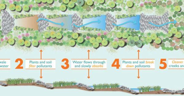 Rain Garden Cross Section Fully Explain Function By Taking