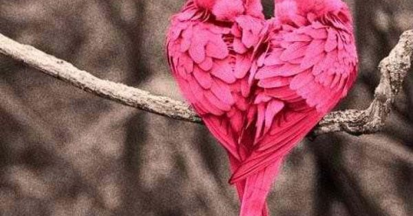 Pink Birds in Heart Shape