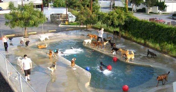 Doggy Daycare Bone Shaped Pool In Pasadena How Cool Dog Daycare Dog Pool Dog Playground