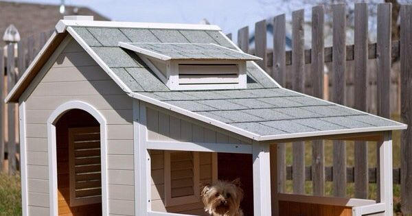 Just to clarify... This is not my dream house, but this dog