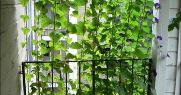 Le mur végétal pour isoler le balcon du regard des autres  Garten ...
