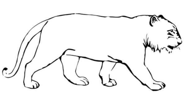 Tiger Without Stripes Coloring Page Free Printable Coloring Pages Coloring Pages Animal Coloring Pages Zoo Animal Crafts