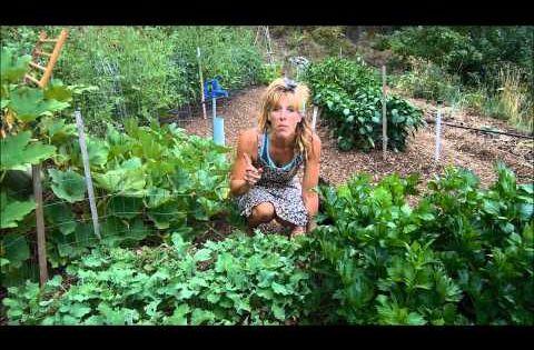 I Love Starry Hilder 39 S Blog Back To Eden Gardening Woodchips And Less Water Youtube Garden