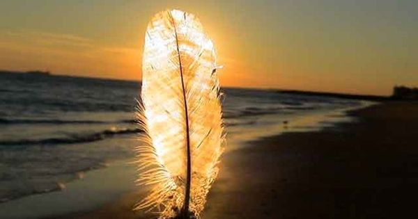 feather light beach sea flame inspiration