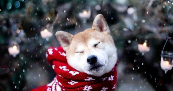 Mire Figyeljunk Telen A Kutyaknal Canine Care Cute Baby Animals