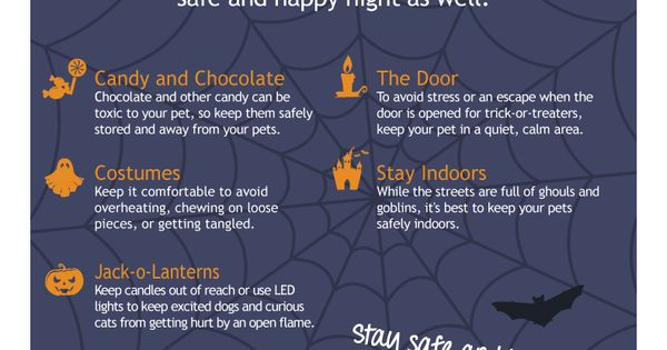Safety tips safety and pets on pinterest