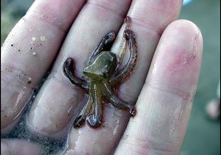 cute tiny animal pic | Sunday, July 1, 2012