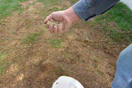 How To Revive A Brown Lawn Lawn Care Lawn Repair Diy Lawn