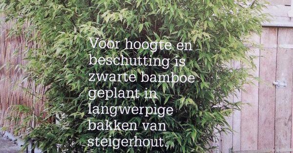 Bamboe voor lastige buren for the love of our home pinterest bamboe tuin en terras - Bamboe in bakken terras ...