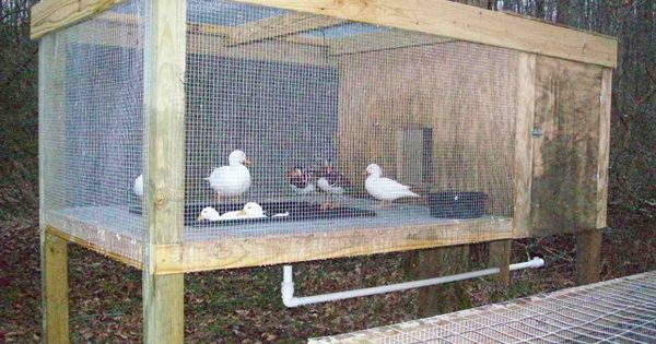 More Info On The Raised Duck Pen Http Www