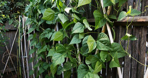 Green Bean Salad with Basil, Balsamic, and Parmesan | Recipe | Green ...