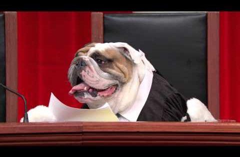 All Rise For John Oliver S All Dog Supreme Court Last Week